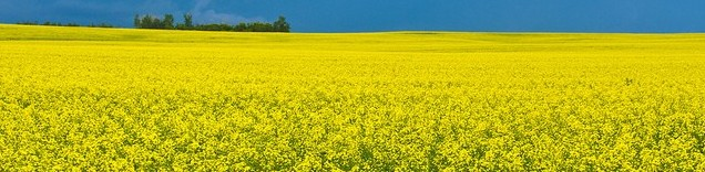 Positive progress on resuming Australian canola exports to China