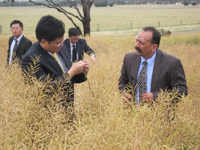 Resumption of Canola trade to China – a step closer